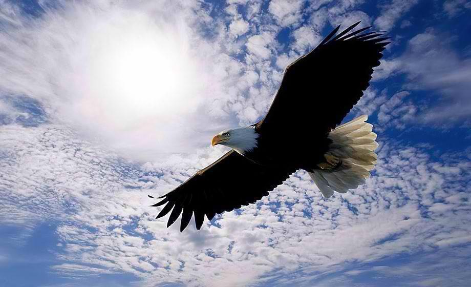 Did you know that an eagle, known as a symbol of the sky and freedom, among birds has the longest life expectancy,since it can live even seventy years, almost as long as man. A necessary condition for its long life is to go through a painful process