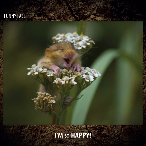 Funny Face - I'm So Happy!