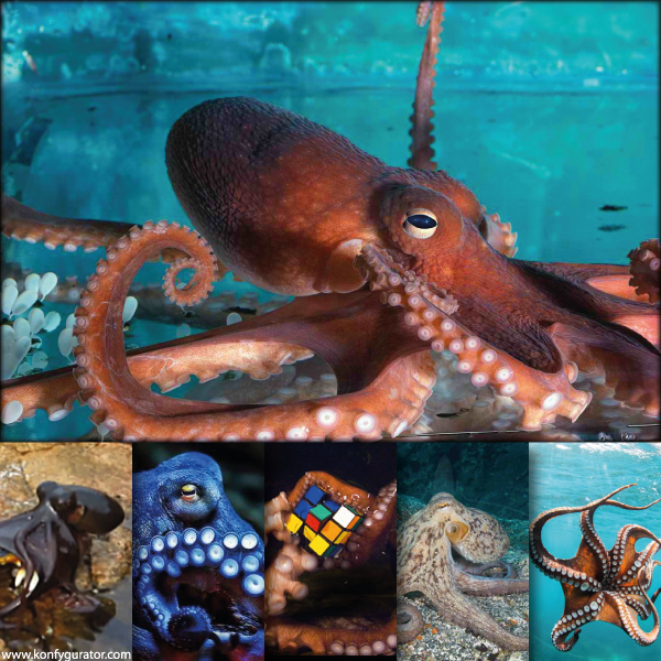 The Oldest And Totally Different – Octopus