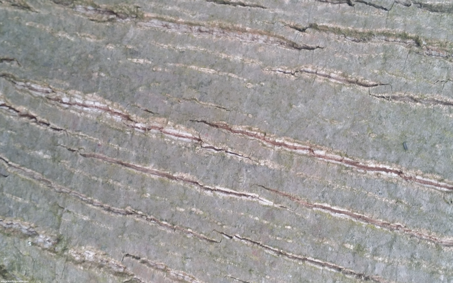 HD Wallpapers - Textures - Okbark, wood, gray