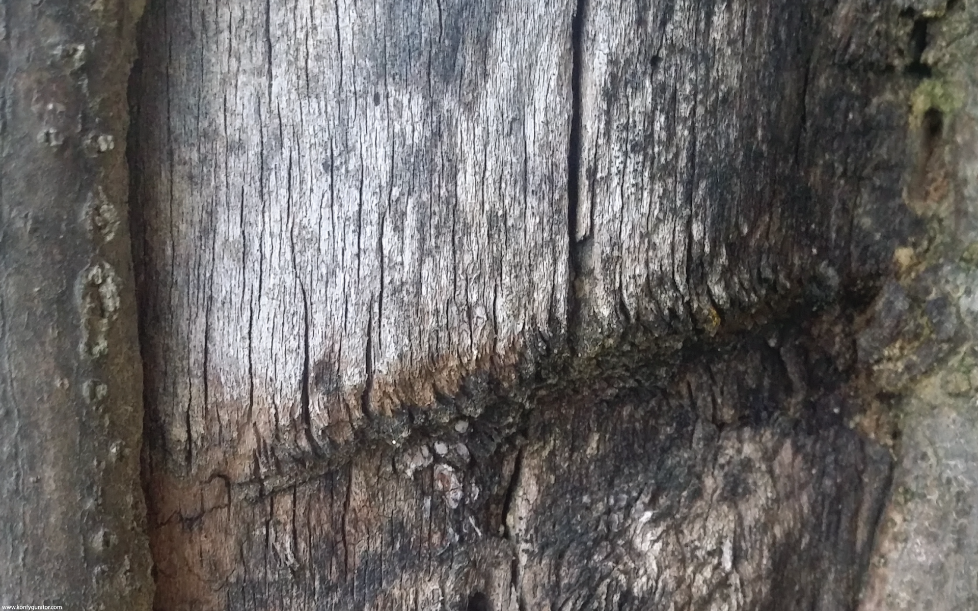 HD Wallpapers - Textures - bark, wood, old