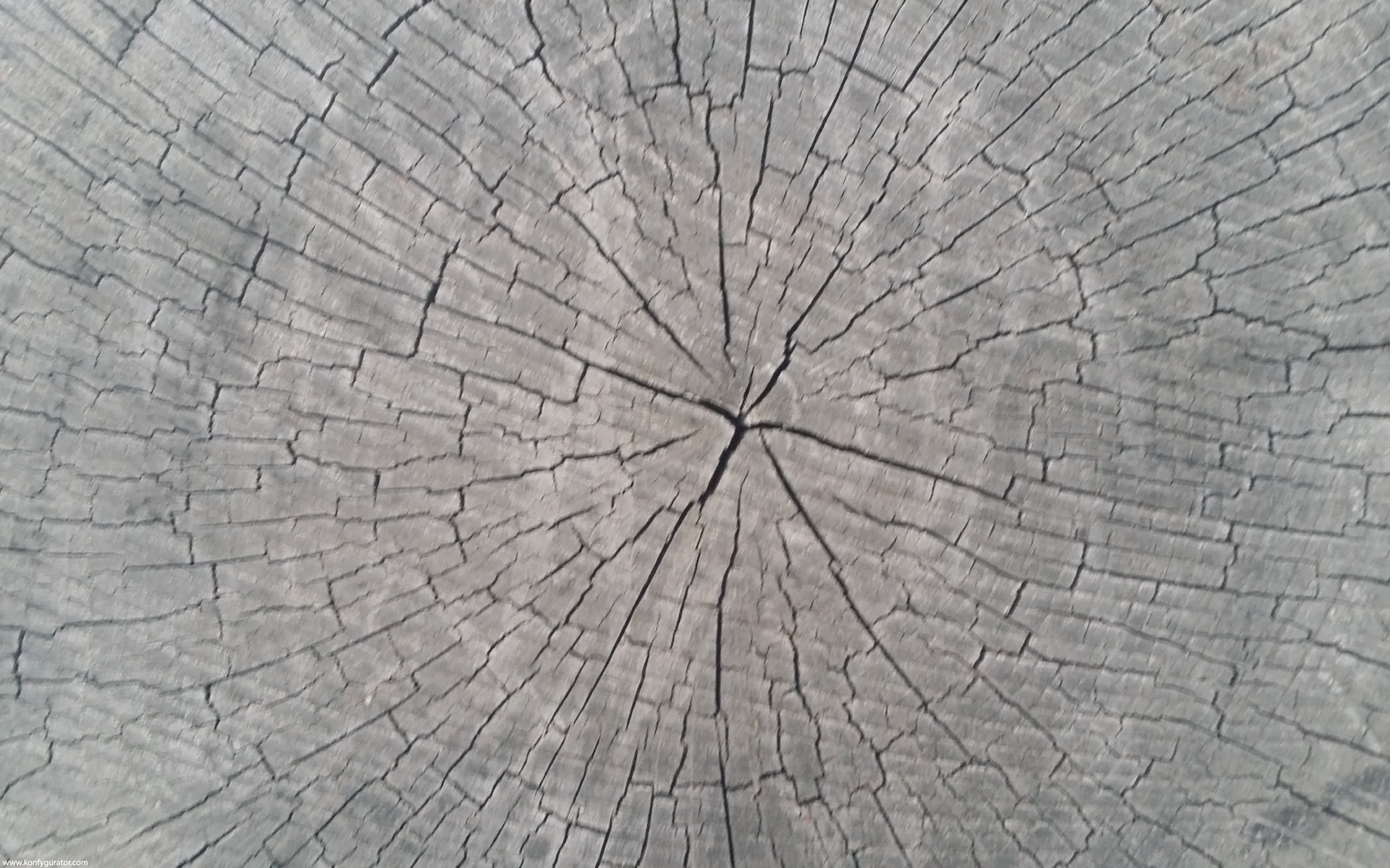 HD Wallpapers - Textures - stump, circle, ring, tree