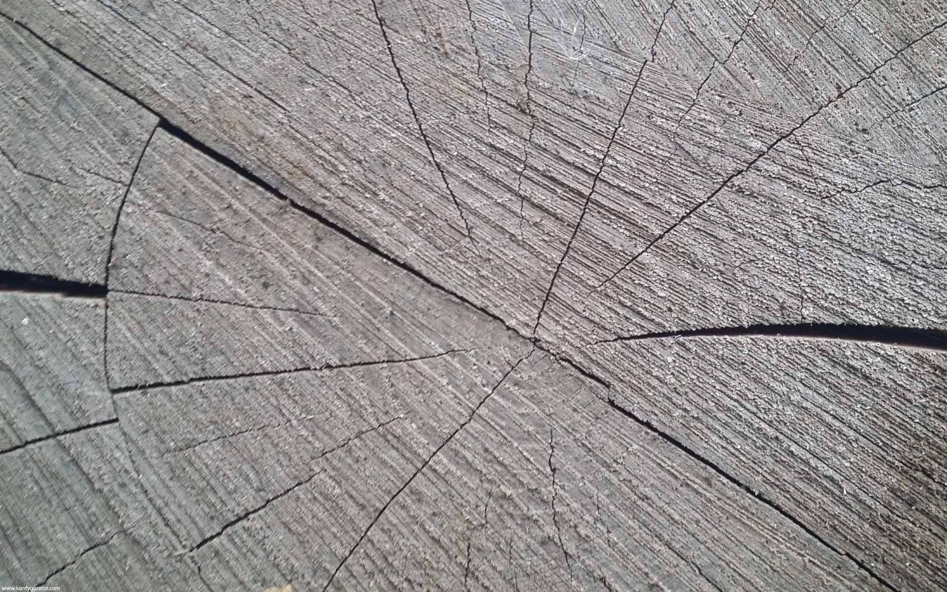 HD Wallpapers - Textures - stump, circular, lines, wood