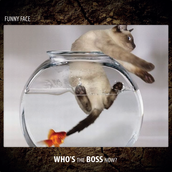 Funny Face - Who's The Boss Now?