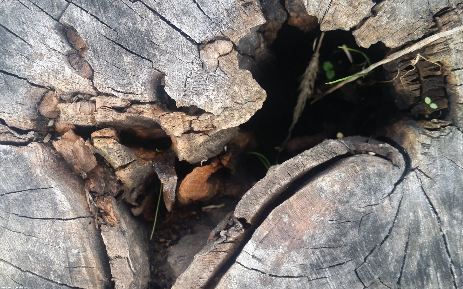 HD Wallpapers - Textures - stump, gap, rotten, hive