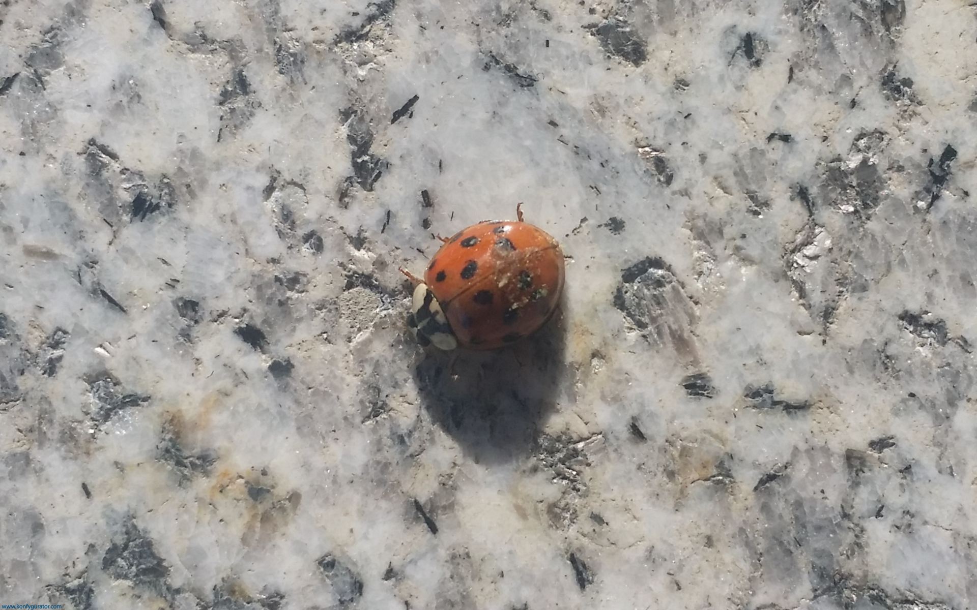 HD Wallpapers - Nature - ladybug, stone, gray