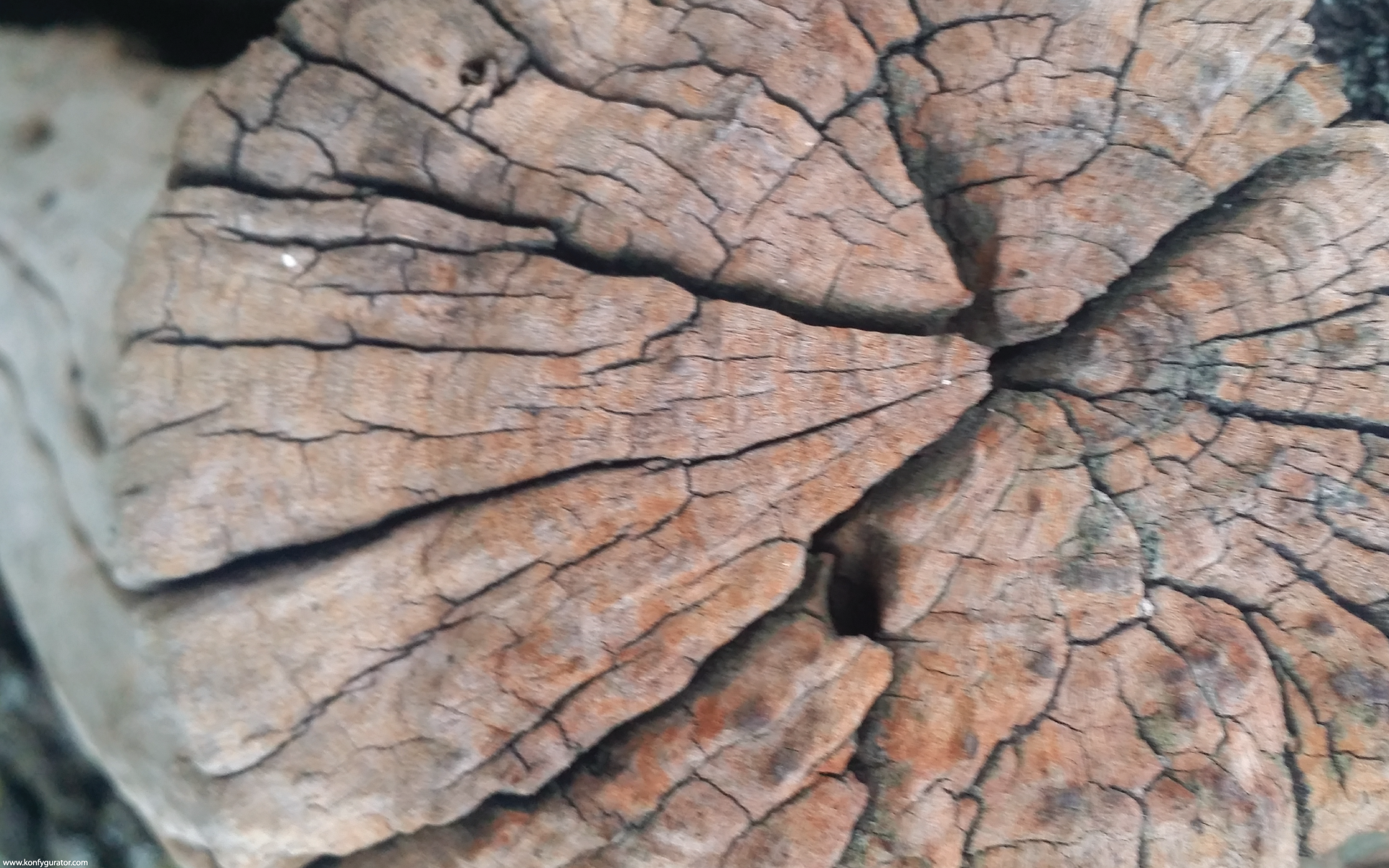 HD Wallpapers - Textures - stump, old, hive, cracked