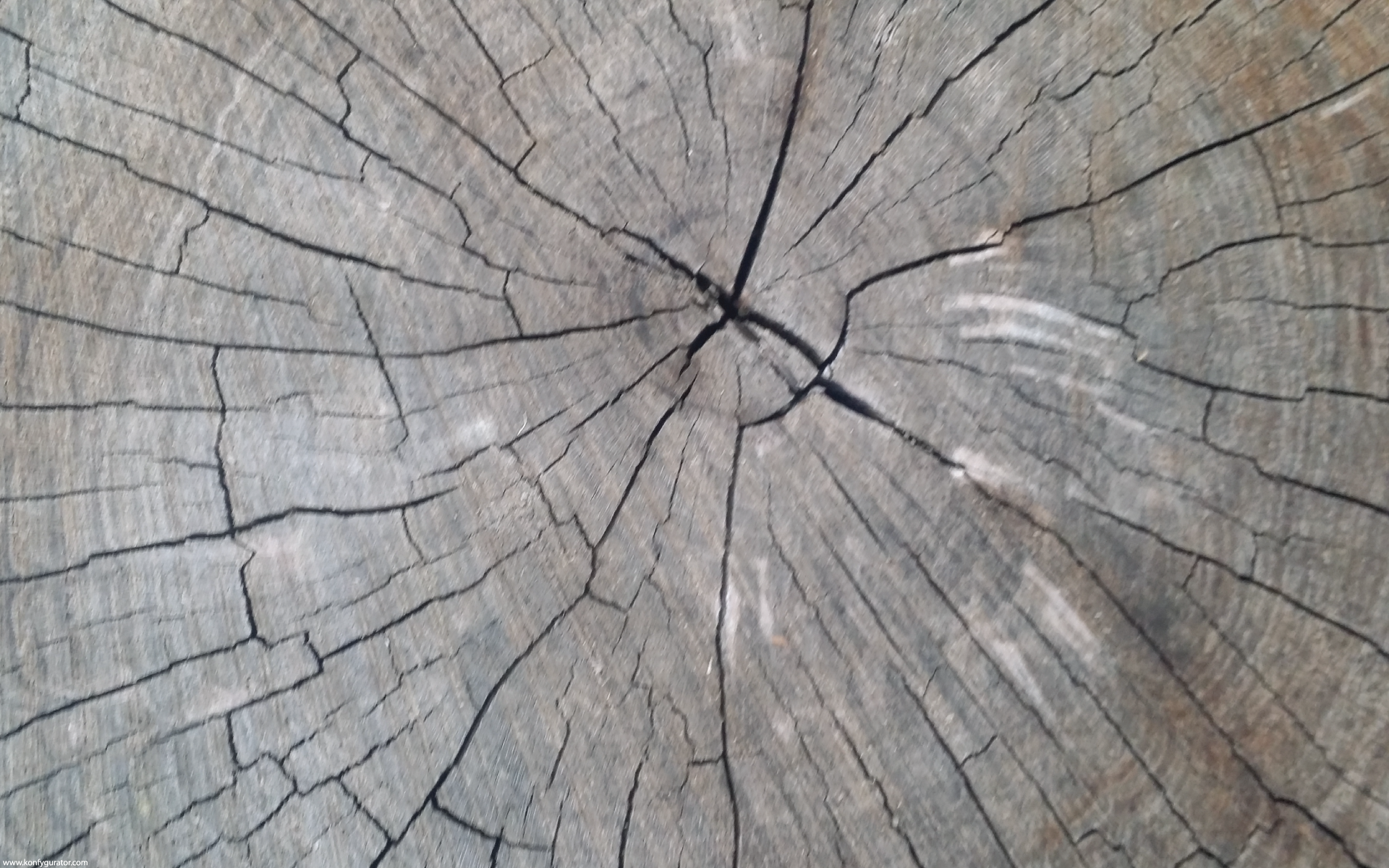 HD Wallpapers - Textures - stump, rings, wood, cracks