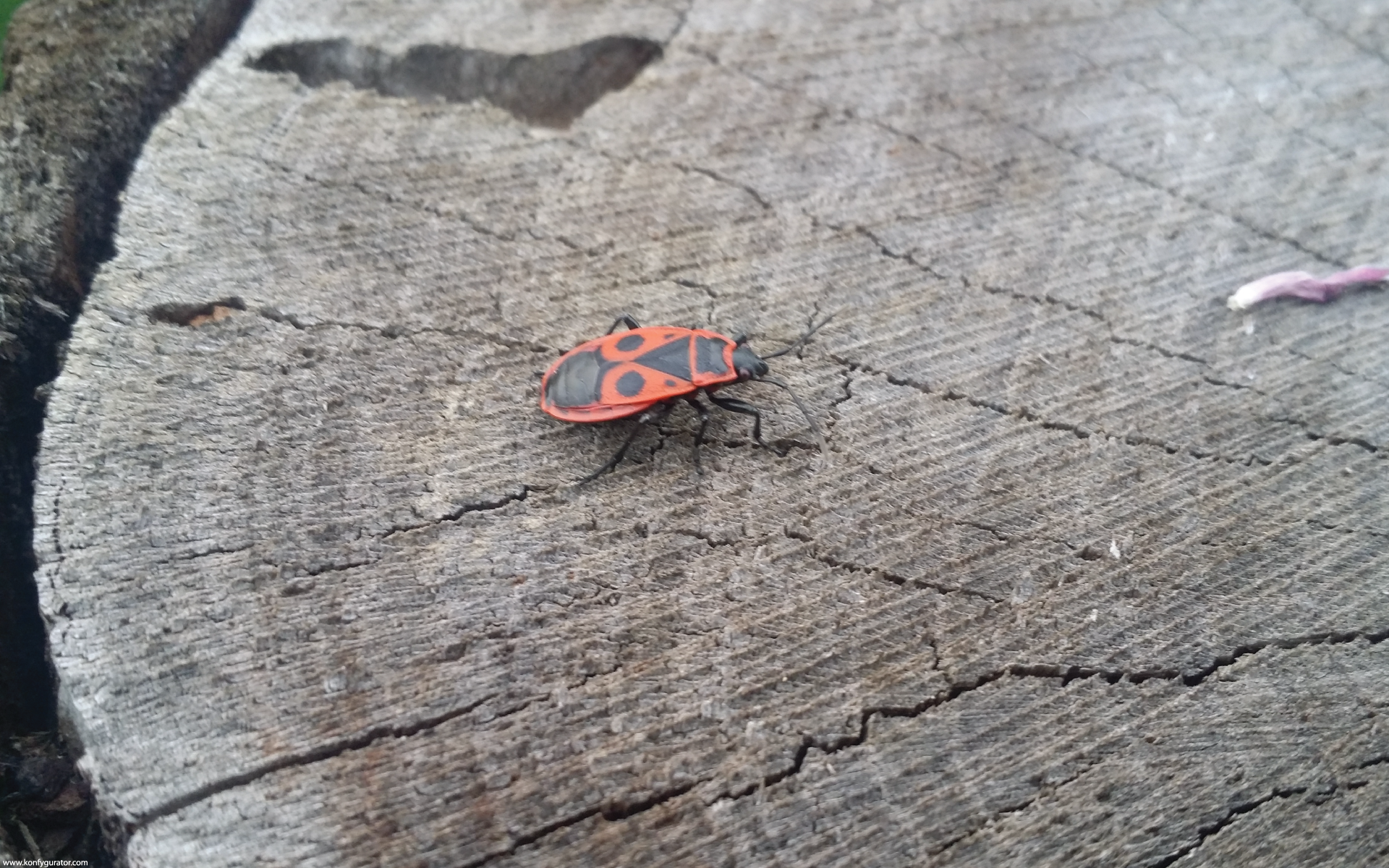 HD Wallpapers - Nature - stump, bug, red