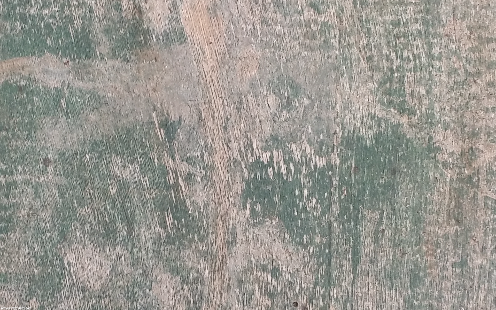 HD Wallpapers - Textures - wood, green, brown
